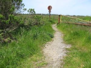 well_worn_path